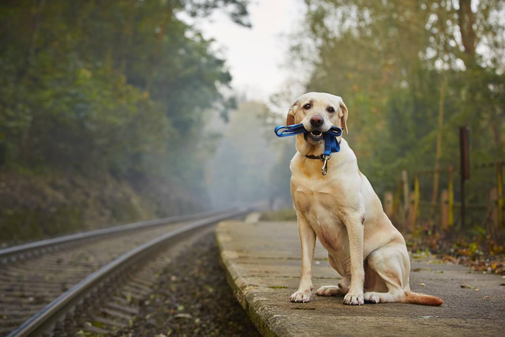Pes na nástupišti