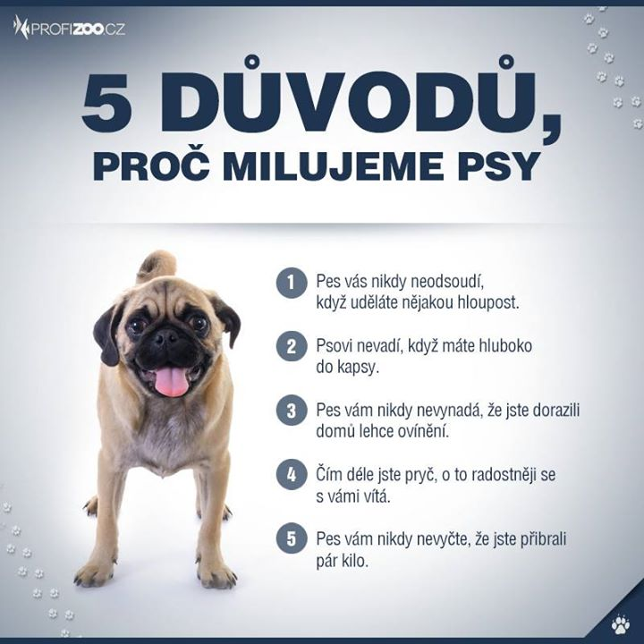5 duvodu, proc milujeme psy