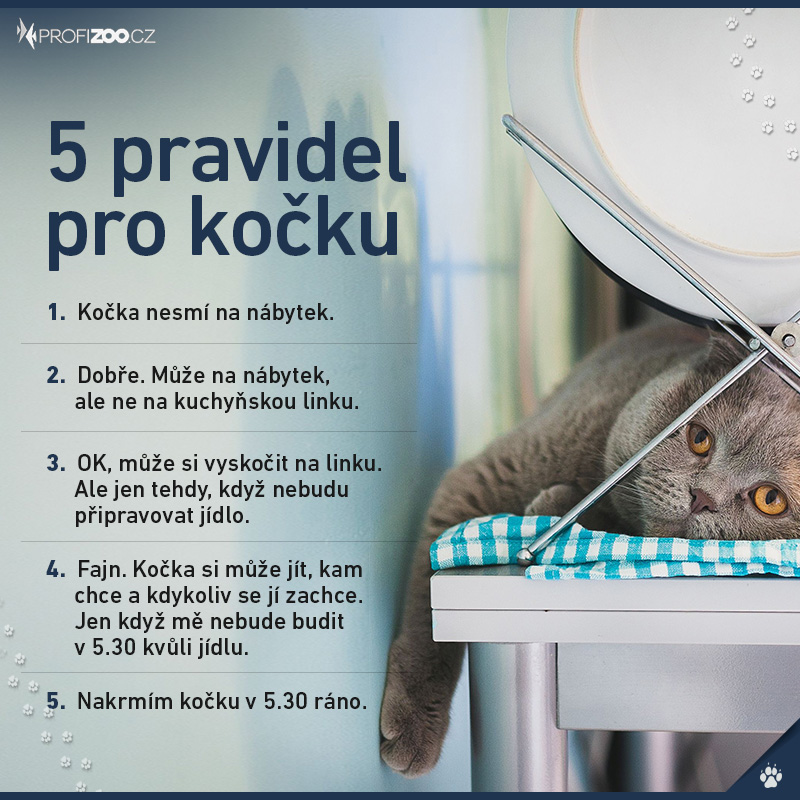 5 pravidel pro kočku