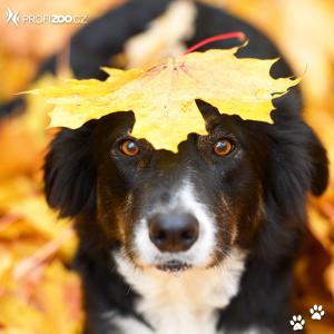 Podzimní pejsek