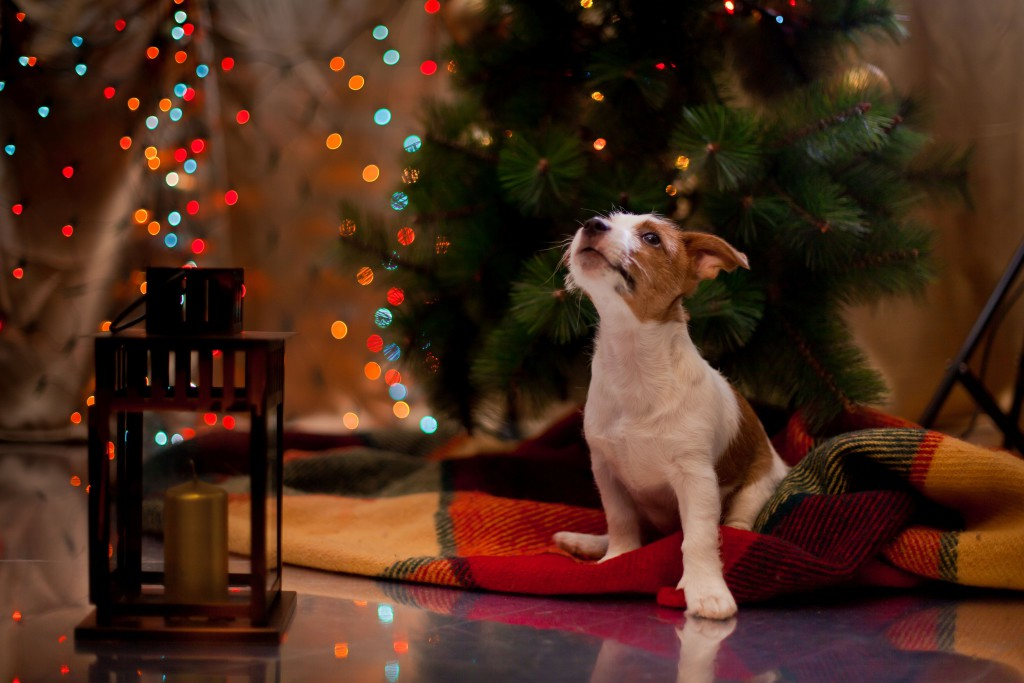 Jak prožívá pejsek Vánoce