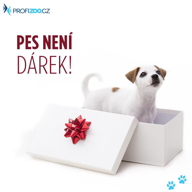 Pes není dárek