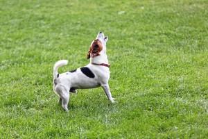 Jak odnaučit psa štěkat